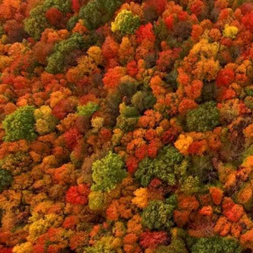 26tb-foliage-articleLarge.jpg