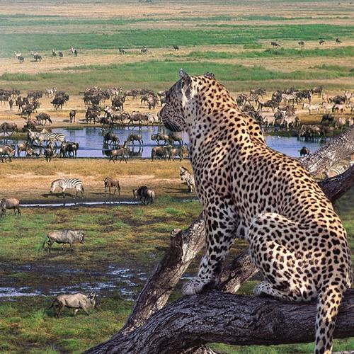 safari-ngorongoro-and-serengeti-tanzania.jpg